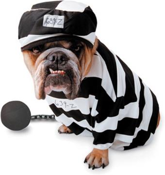 Костюм заключенного для собаки