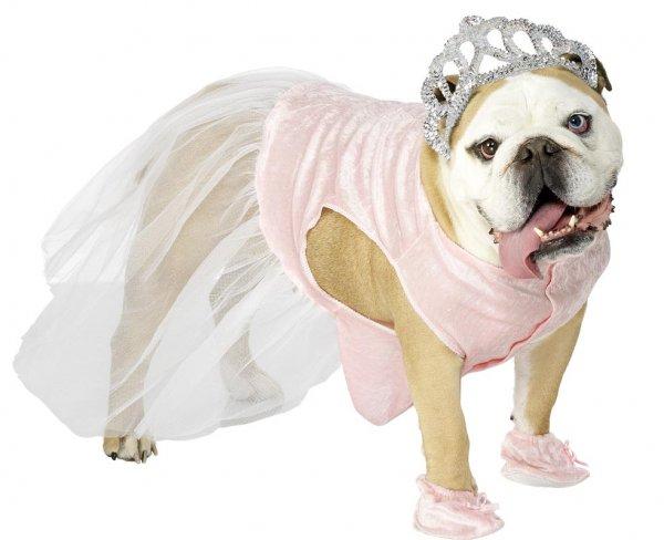 Костюм Золушки для собаки
