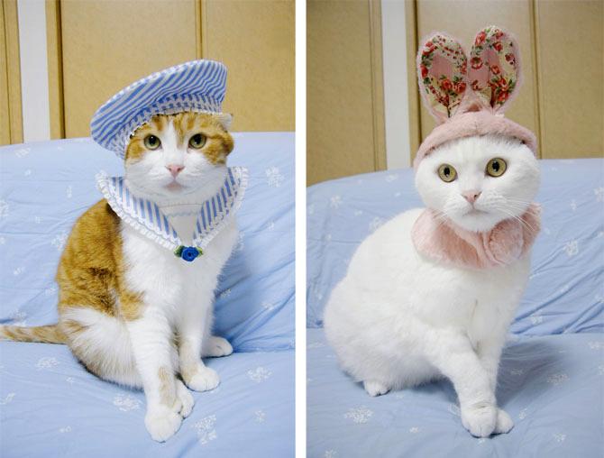 Костюмы для кошек