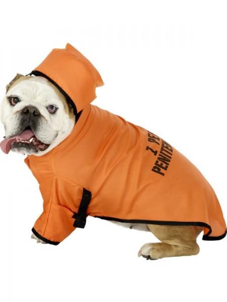 Забавный костюм для собаки
